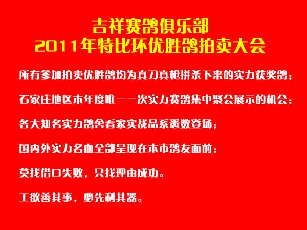 石家庄吉祥俱乐部2011秋特比环优胜鸽拍卖大会11月5日举行高清图片