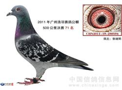 张氏鸽舍全棚拍卖
