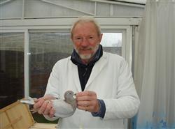 即将结拍比利时盖比原棚闪电孙,比利时长距离先生范德马勒原棚鸽