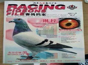 31期《赛鸽档案》杂志已全国发行,征订及咨询电话:18630617977