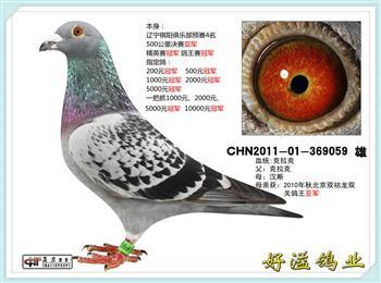 ******北京好溢鸽业--神奇克拉克家族*****