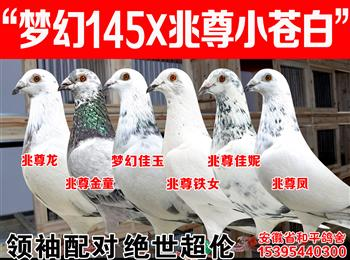 """梦幻145/詹森""""公主号""""子代/帝王冬日/荷比874/公牛55/兆尊宝马/百万巴龙"""