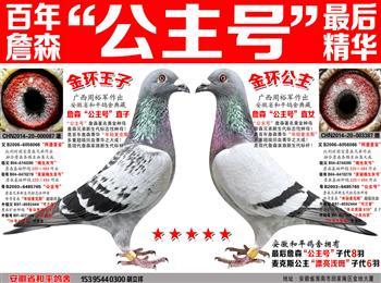 安徽省和平鸽舍清棚结束养鸽告示