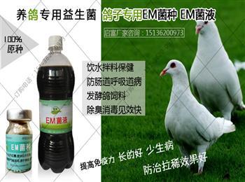 鸽子饮水保健EM益生菌原种厂家