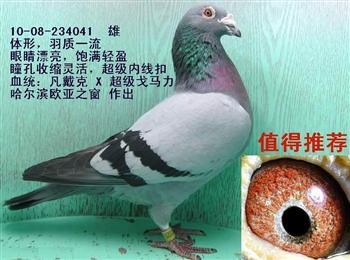 南方鸽园新上传精品台鸽,血统鸽多羽,敬请关注!