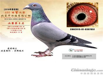 *****北京黑郎鸽业*****