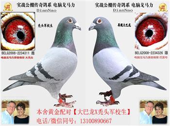 贺2018年春大庆飞雪电脑巴龙获公棚热身赛冠军、姜杰使翔、