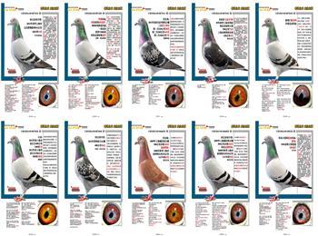 迎五一!上海龙园精选优质低价纯品系种鸽。