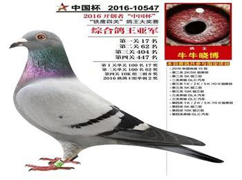2016年开创者铁鹰四关特比环综合亚军