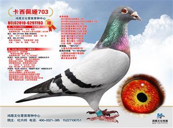 高端赛鸽摄影期待与您合作