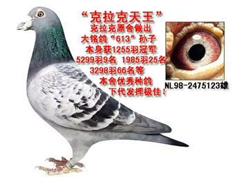 北京-诚聘信鸽饲养员及学徒