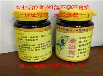 专业治疗雌/雄鸽不孕不育症、台湾(速蛋宝)