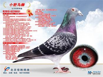 北京爱亚卡普公棚330公里四名获百万指定奖金。