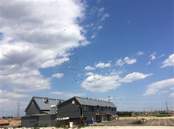 京良路附近独院赛鸽加种鸽棚出租;