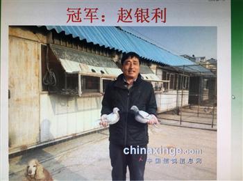 敬请关注北京赵银利西城元旦杯双关奖鸽拍卖