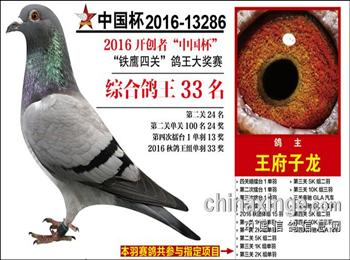 招聘种鸽饲养员