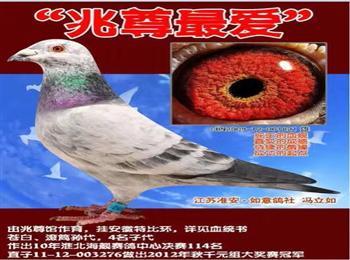 淮安如意鸽社现因年老急迁南京生活特转让全棚爱鸽有喜欢的请联系我微信电话均为18912072821