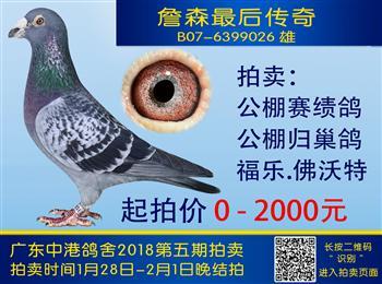 中港鸽舍实战鸽系第五期拍卖