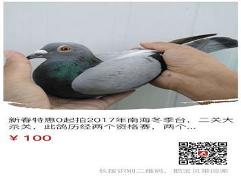 17年冬季台鸽,种鸽新春特惠0元起拍