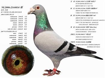 身体不适、彻底清棚、本鸽业所有种鸽清棚转让.一羽不留。