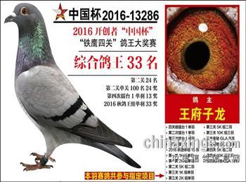 求租北京西五环周边鸽棚