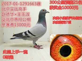 转让一只北京惠翔预赛21名电话微信15896652278