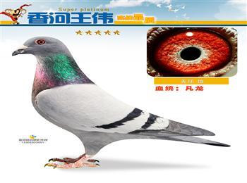 蓝骏铭鸽摄影传媒