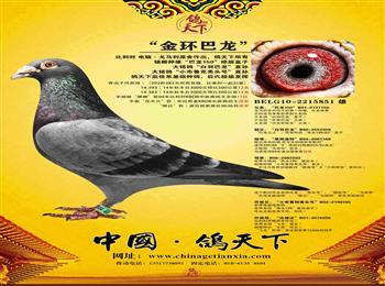 北京鸽舍招聘工作人员