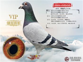 《各地鸽舍》出售所有种鸽,冠军鸽