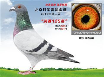 因拆迁出售部分信鸽(公棚和地方赛季鸽),有国血、飞戈、胡本、佛卡门、红二线等。欢迎来电咨询。