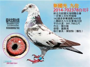 福州北翔台鸽-北海春季2018刚下船的台鸽