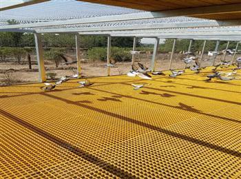 玻璃钢格栅鸽舍,养殖专用格栅,鸽舍地网,-限时优惠