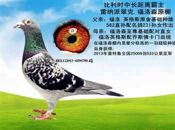 原环成绩鸽,精品种鸽,清棚出售
