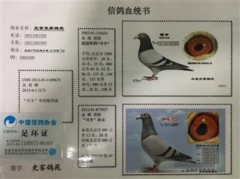 低价北京名家千公里种雌