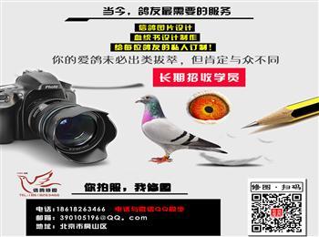 专业后期信鸽修图、承接北京等地方摄影