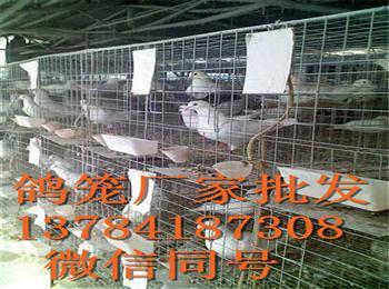鸽子笼厂家批发铁丝网鸽笼养殖笼具价格图片