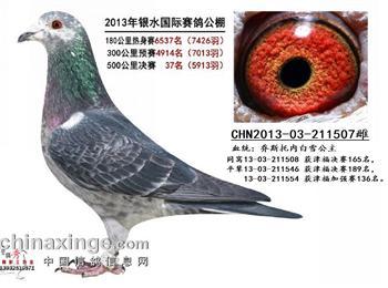 北京黄金赛线鸽棚出租、出售多羽获奖鸽