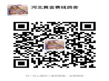 出售天津开创者参赛鸽一只,另外高价收购天津开创者参赛鸽