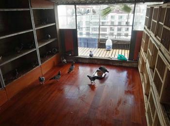 出售上海房产(适合饲养鸽子)
