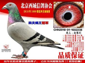 感谢大家关注北京赵银利鸽业