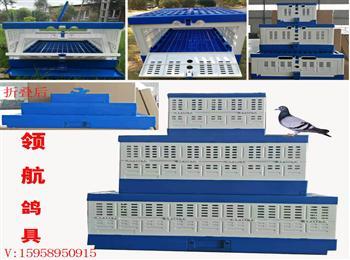 领航鸽具训放笼一体式折叠提拉笼鸽子放飞笼比赛鸽笼