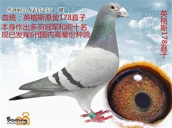 哈尔滨田园鸽业鸽舍空间有限,转让部分种鸽和当年幼鸽