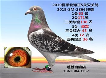 刚上船2019夏季北海正4关灭关台鸽3羽超高质量,微信电话13623049157