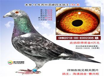 阳光、长城、开尔、辉煌、中奥、皇府、安华、宫王府、天体、上海风云等众多名家种鸽拍卖。。。。。