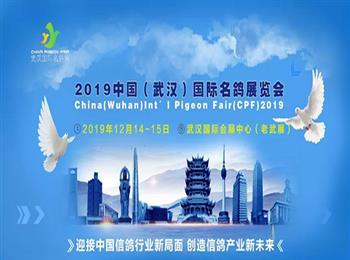 创造信鸽产业新未来!2019中国(武汉)国际名鸽展火热招商中……