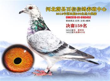 河北华美铭鸽文化传媒承接全国各地信鸽摄影服务……