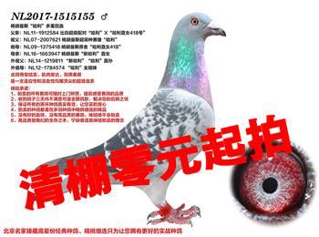 北京清棚!:哈利直�O、高位成���、�典�血