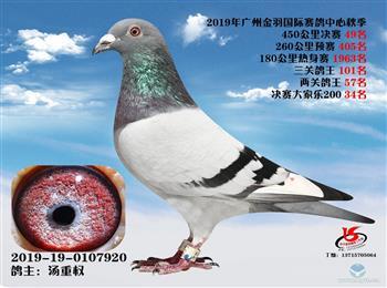 广东鸿翔鸽舍2020年优质种幼鸽平价分让!