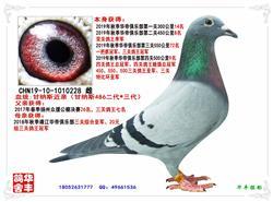 江苏华丰鸽舍获得2020年春三关鸽王1-5名、8-10名