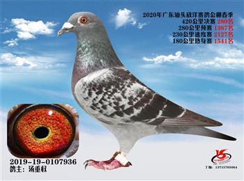 鸿翔鸽舍输出种鸽连续两年作出公棚鸽王亚军,鸽王季军。